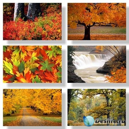 Осенняя природа / Nature autumn. Подборка №1