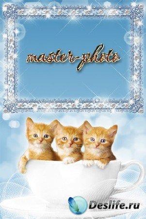 Рамка для фотошопа с котятами