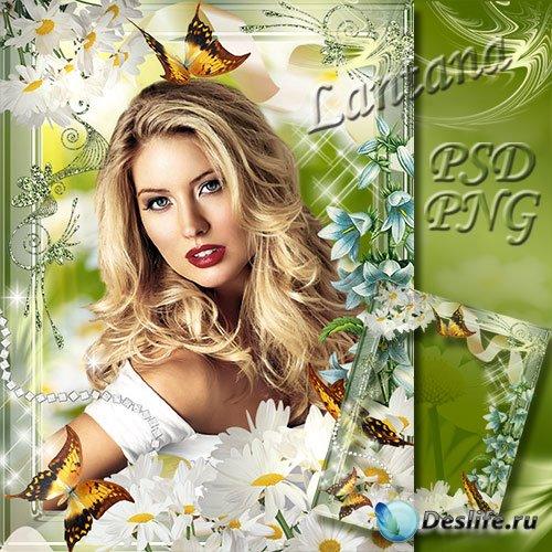 Рамка для фотошопа - Лето, бабочки, ромашки
