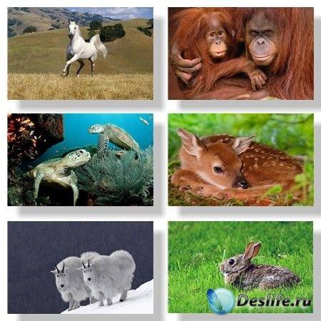Животные / Zoons. Подборка №1
