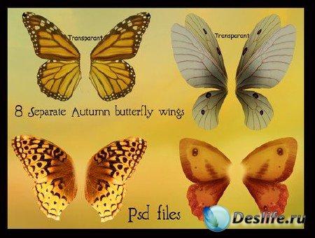 PSD-исходник - Крылья бабочек