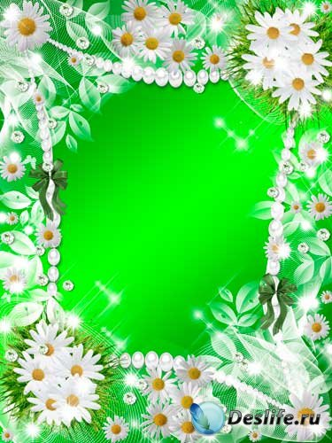 Рамка для фотошопа - Ромашки полевые