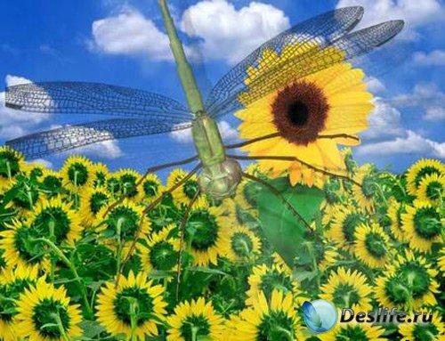 Летняя анимация - Подсолнух