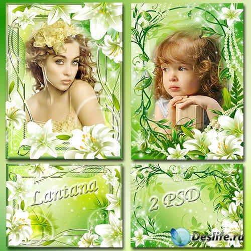 Рамки для фото - Белые, чистые, нежные лилии, как же приятно ваш запах вдых ...