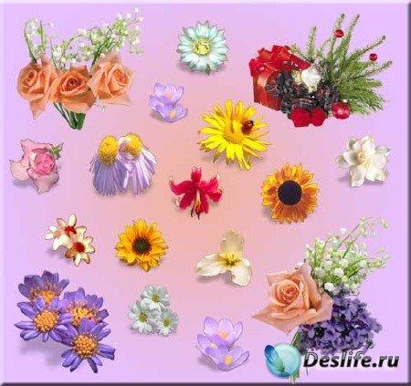 Сборник PNG-клипарта с нежными цветами для фоторамок