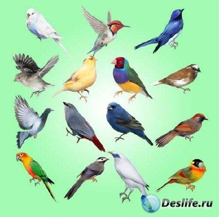 Набор клипартов - Птицы