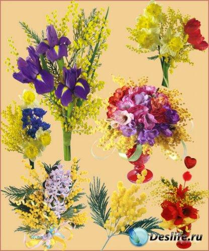 Клипарт - Цветы мимозы