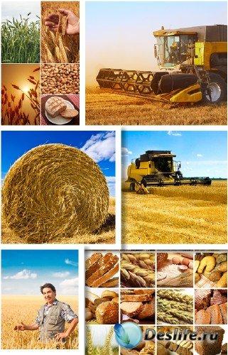 Урожай пшеницы и хлеб - растровый клипарт | Harvest wheat and bread
