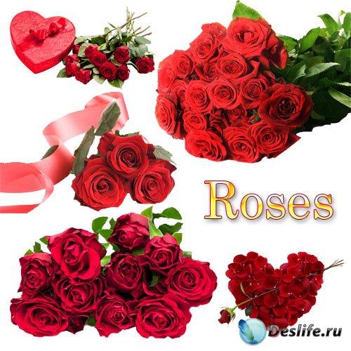 Клипарт - Красные розы