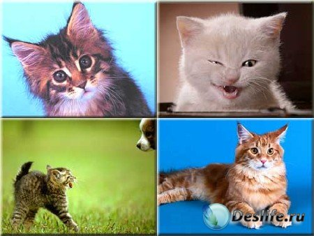 Сборник фото - Котята и кошки