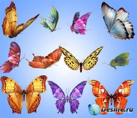 Сборник клипарта бабочки