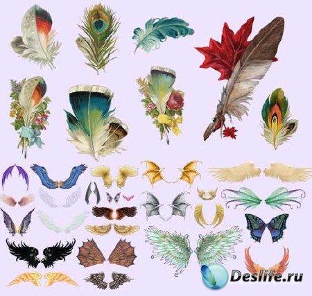 Набор клипарта - Крылья и перья