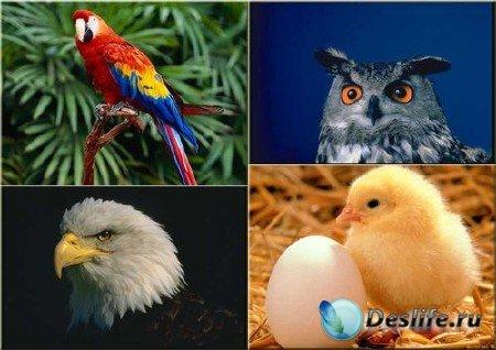 Подборка растрового клипарта птиц