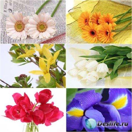 Подборка красивого растрового клипарта с нежными цветами