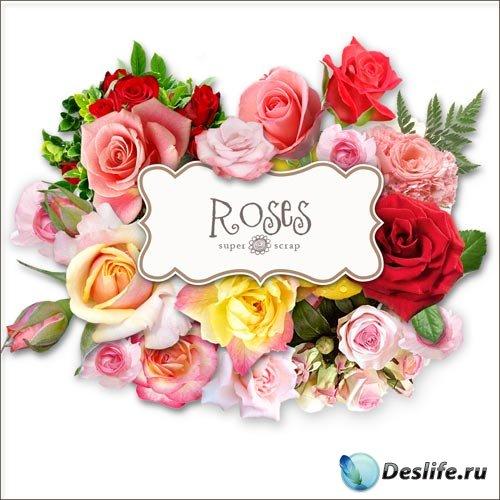 Скрап-набор - Клипарты Роз