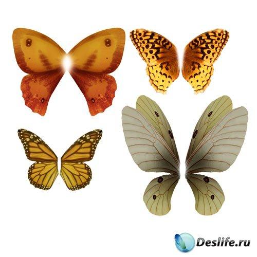 PSD Клипарты Крылья бабочек повышенного качества