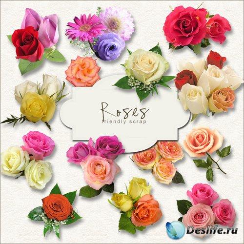Скрап-набор - Разноцветные Розы