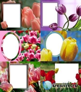 Рамочки для фотошопа - Тюльпаны