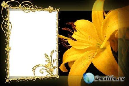 Рамка для фотошопа - Золотая Лилия