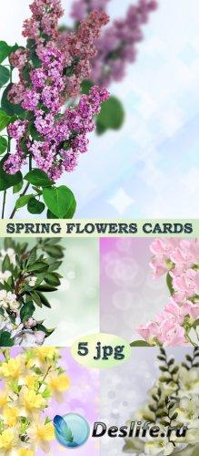 Карточки с весенними цветами
