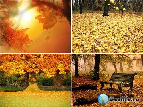 Фоны для Photoshop - Золотая осень