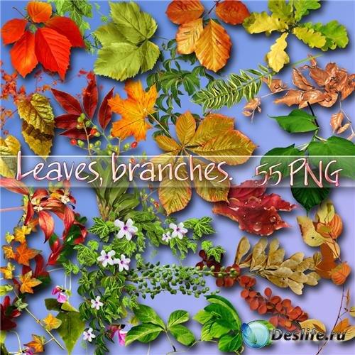 55 png Листья, ветки