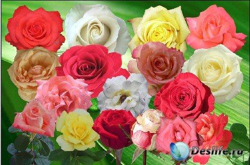 Клипарт - Розовый  сад любви
