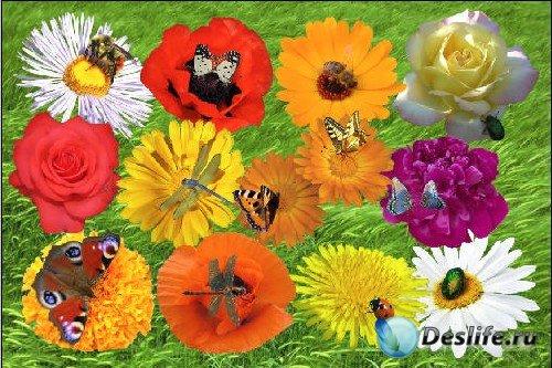 Клипарт - Цветы и их жители