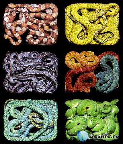 Змеи на фотографиях известного французского фотографа Guido Mocafico