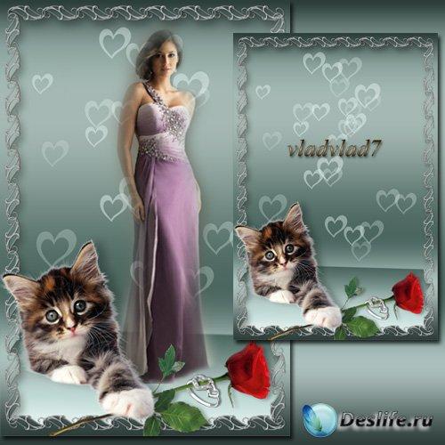 Романтическая фоторамка - Котенок с красной розой