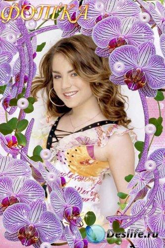Рамка для фотошоп - Красивые орхидеи