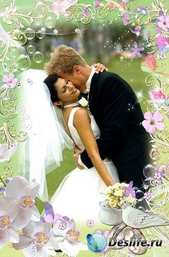 Нежная рамочка для оформления фото - Свадебные орхидеи