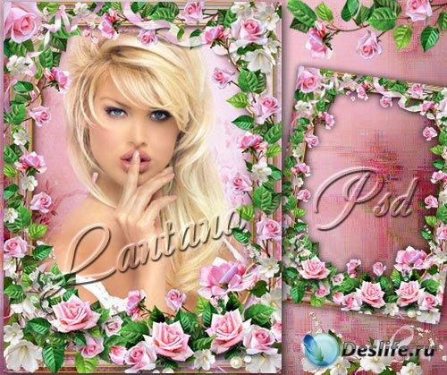 Рамка - Бывают ли на свете цветы, прекрасней нежной розы