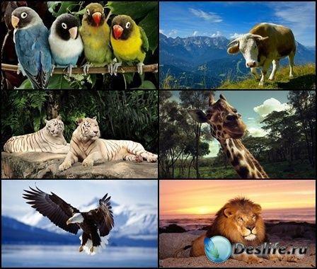 Коллекция обоев на тему Животные №4