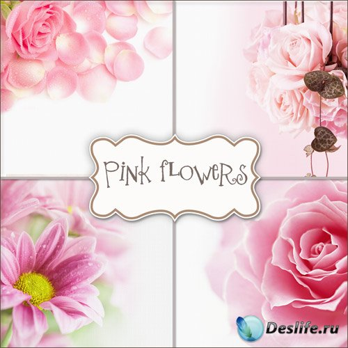 Цветущие Розы - Фоны