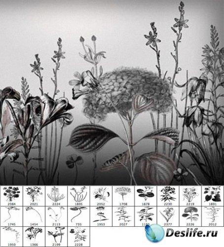 Полевые цветы - Кисти