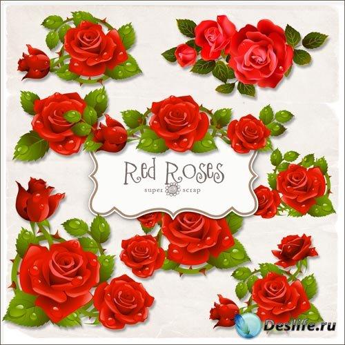Клипарт - Прекрасные розы