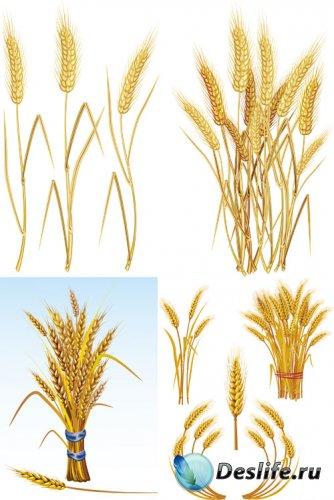 Векторный клипарт - пшеница / wheat vector Collection