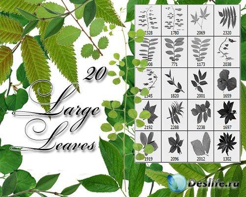 Кисти - Большие листья