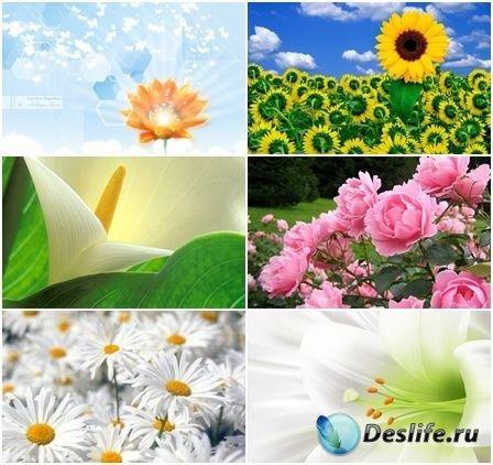 Коллекция обоев на тему Цветы №1