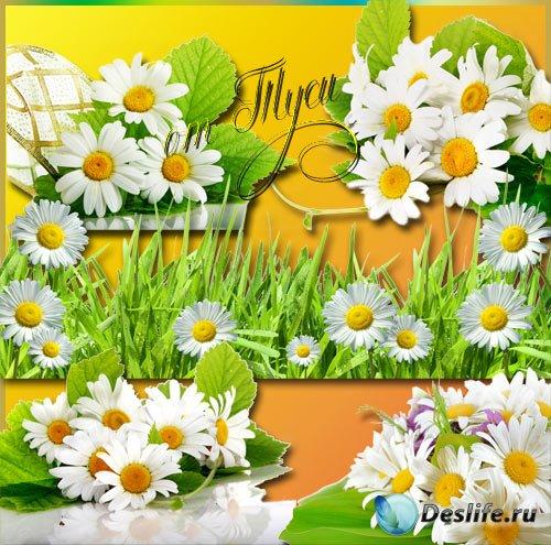 Клипарт - Ромашка - солнечный цветок