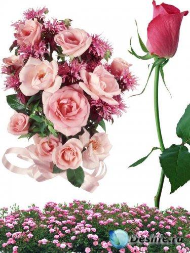 Фотосток: цветы - розовые розы (часть первая)