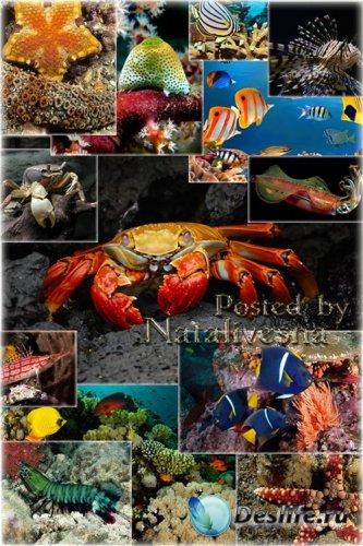 Красивые обитатели моря - Креветки, кальмар, морская звезда, рыбки