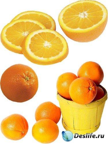 Фотосток: цитрусовые фрукты - Апельсин