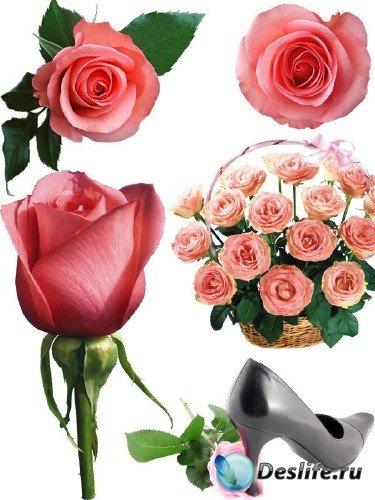 Фотосток: цветы - розовые розы (часть вторая)