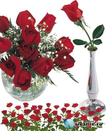 Фотосток: цветы - розы красные и алые