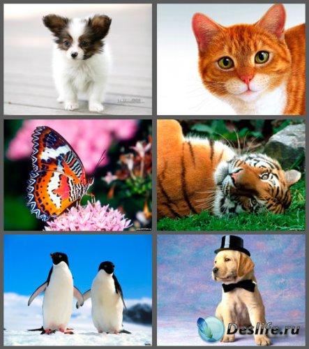 Большая коллекция обоев с животными