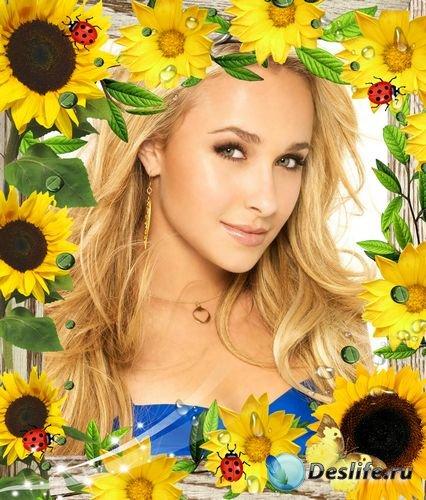 Рамка для фото –  Ах, подсолнухи, солнечные цветочки…