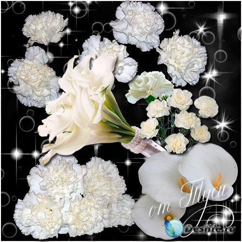Клипарт - Земные звезды – белые цветы