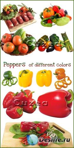 Перец разноцветных оттенков - растровый клипарт